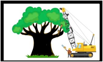 ağaç budama, ağaç budama yapanlar, ağaç budama fiyatları, budama