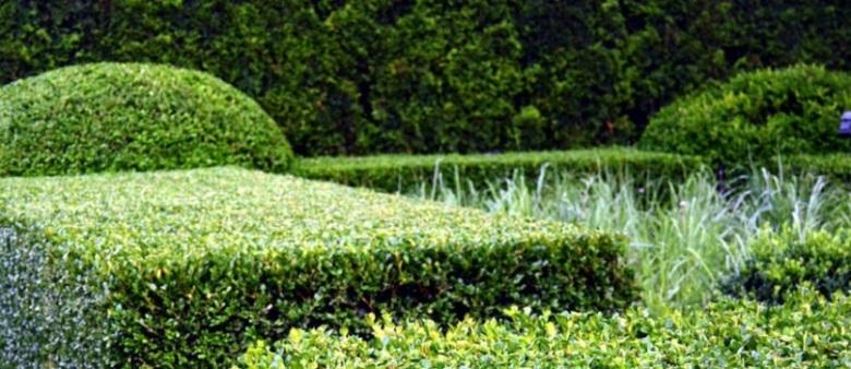Çit Bitkileri budayan firmalar