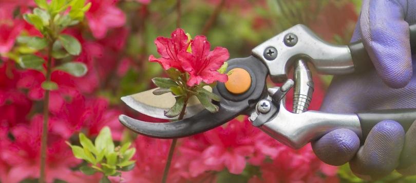 çiçek ağacı budama yöntemi
