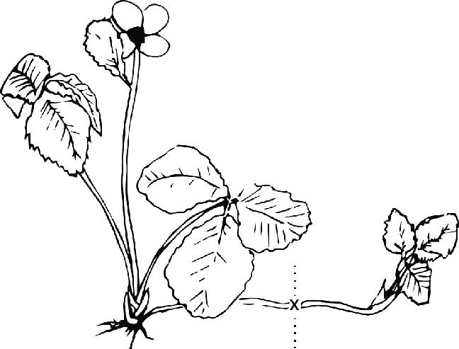 çiçek budama nasıl yapılmalıdır