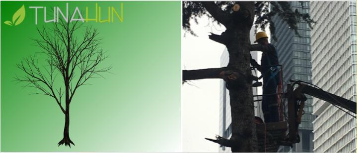 Ağaç Budama Firma Telefonu