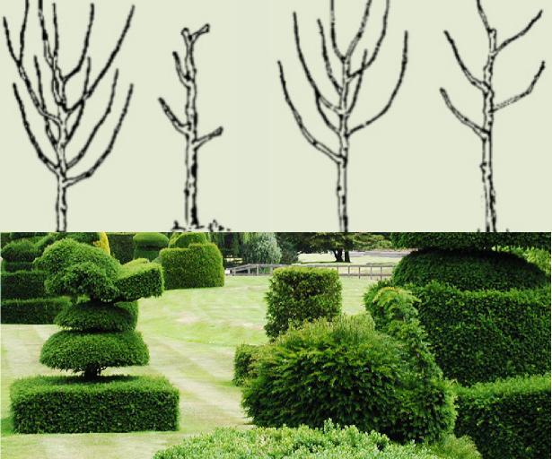 ağaçlarda şekil budaması yapma