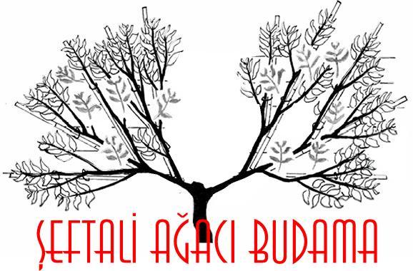 şeftali ağacı budama
