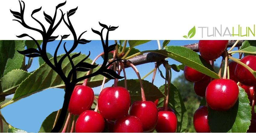 Meyve Ağaçları Budama Yöntemleri