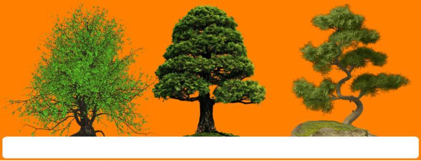 bonsai ağaçları özellikleri