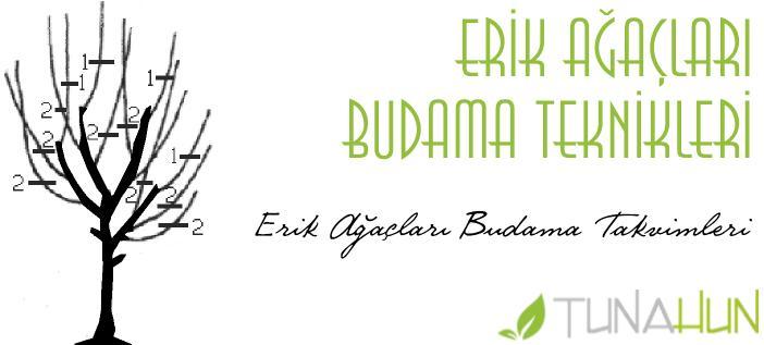 Erik Ağaçları Budama Takvimleri