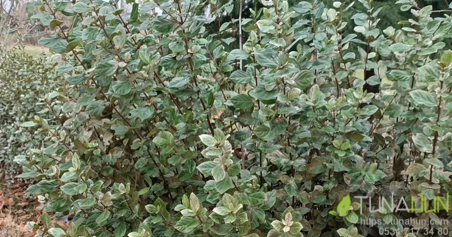 Maltepe bahçe bakımı firması