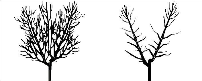 Goble Ağaç Budama