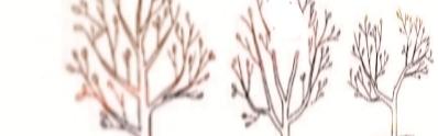 dut ağaçları budama