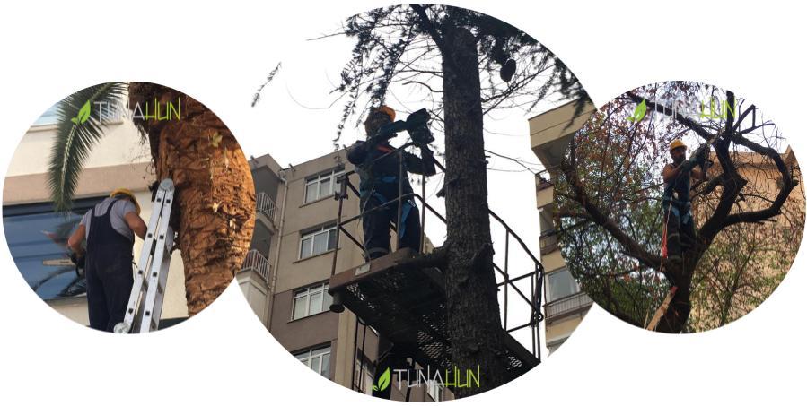 ağaç budama, ağaç budama istanbul, ağaç budama şirketi
