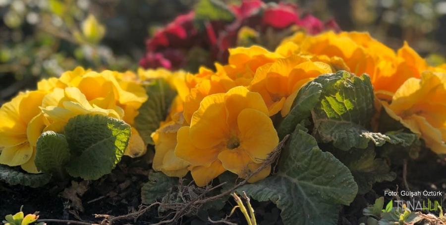 peyzaj, bahçe bakımı ve uygulama