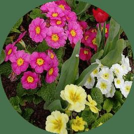 aylık bahçe bakımı