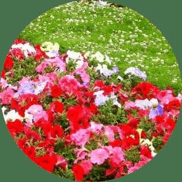 bahçe bakımı aylık