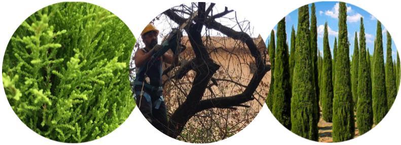 leylandi ağacı budama şirketi