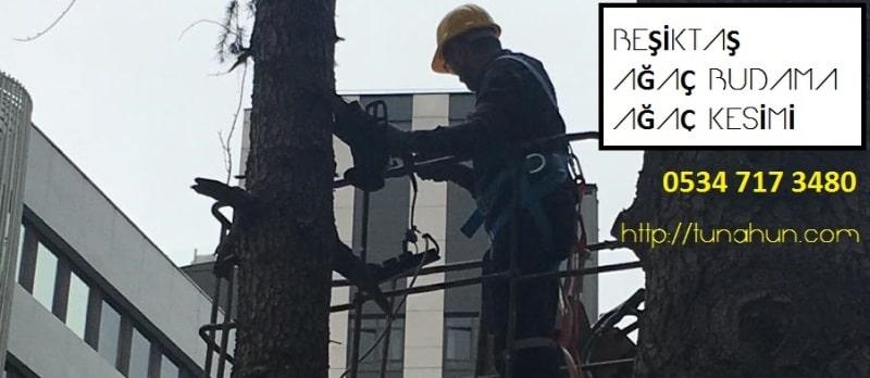 Ağaç Budama Firması Beşiktaş