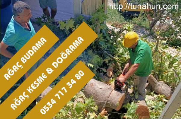 maltepe ağaç budama firması