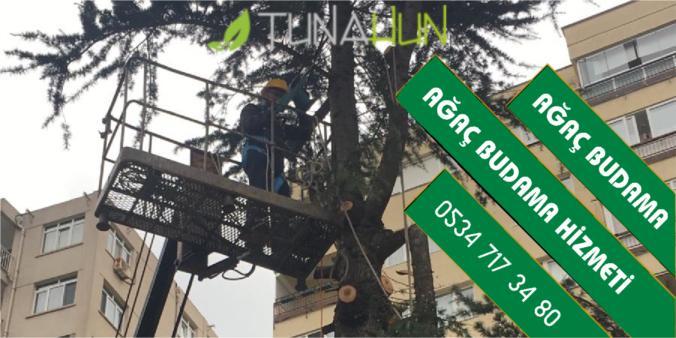 ağaç budama istanbul, budama firması