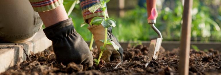 bahçıvan bahçe düzenleme firması